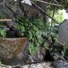 中目黒八幡神社の湧水