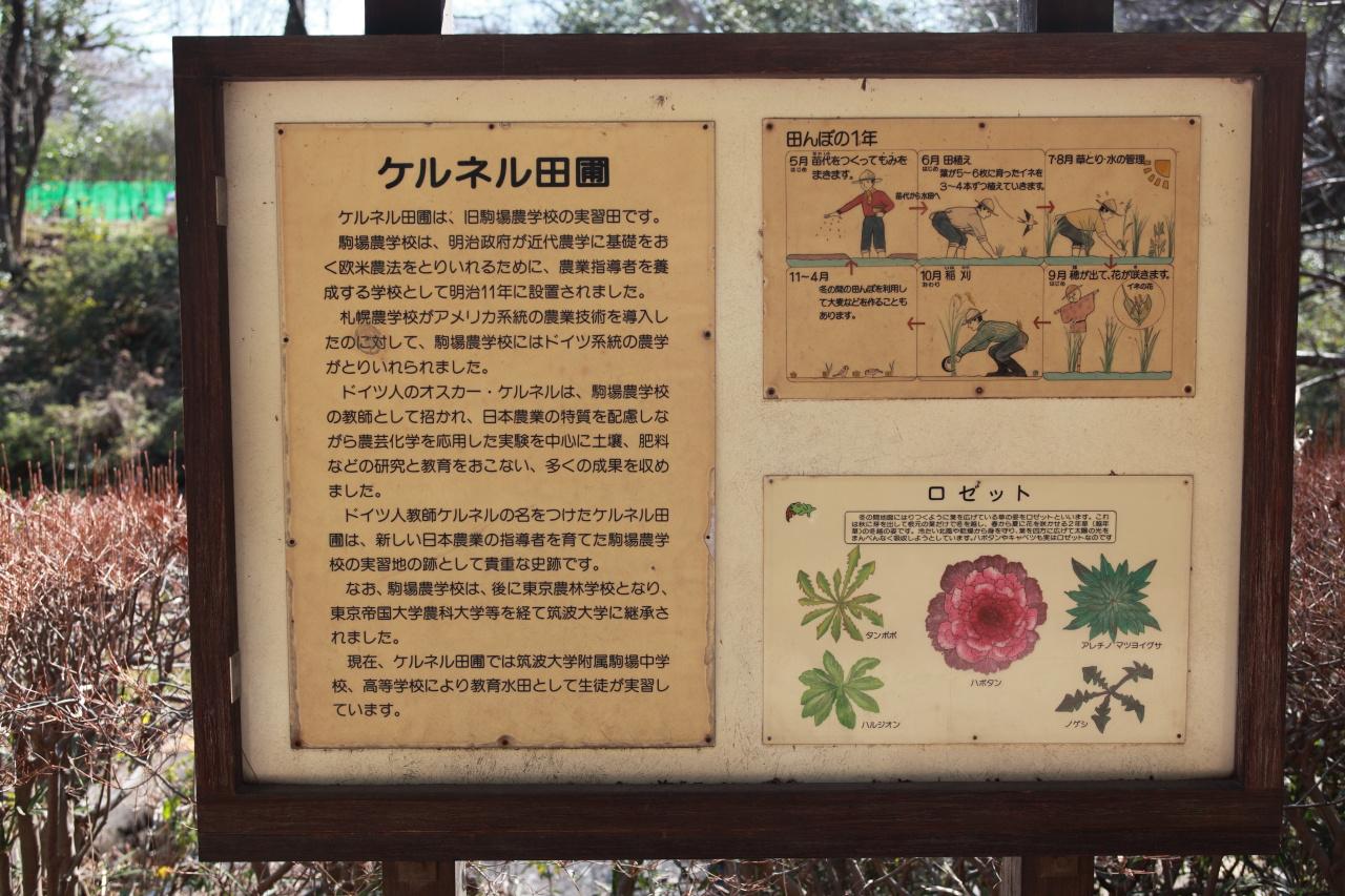 駒場公園 (目黒区)